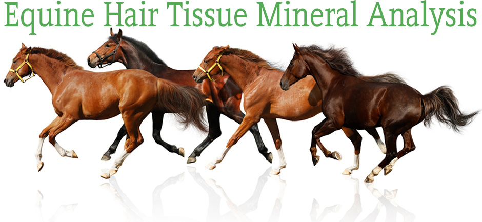 equine-hair-tissue-mineral-analysis-2